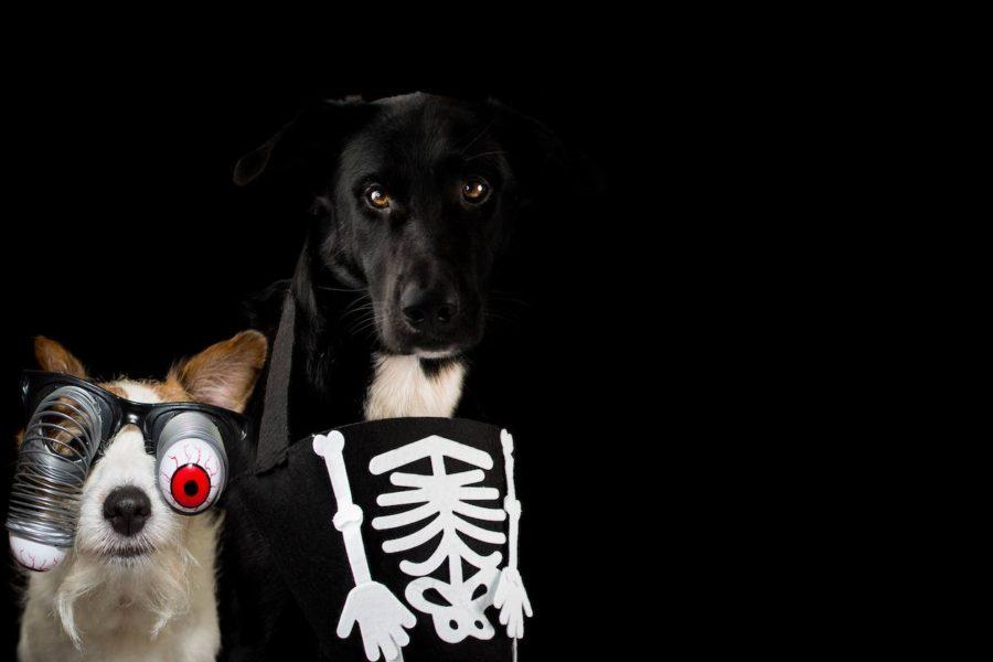 Cute Zombie Dogs